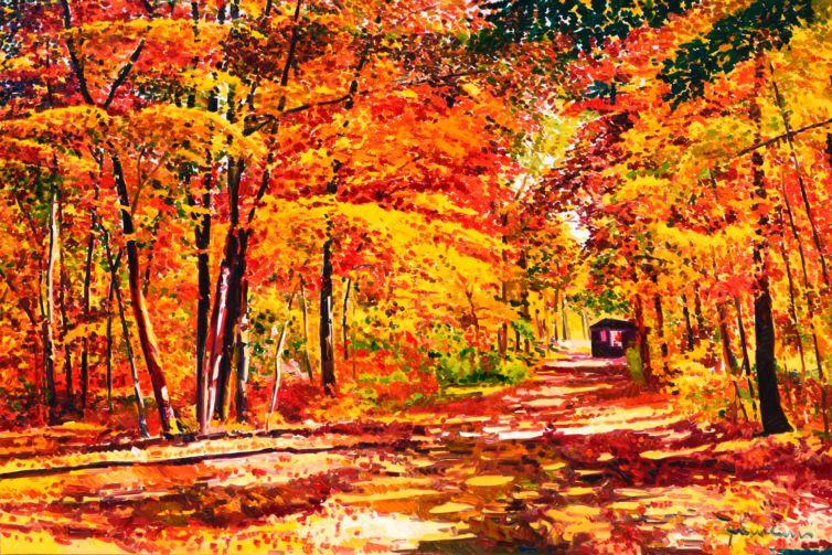 Sentiero di luce nel bosco